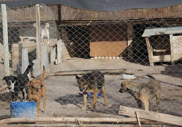Tres fundaciones controlan actividad de la perrera municipal