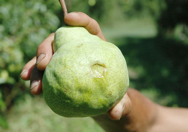 Aportes para la fruticultura