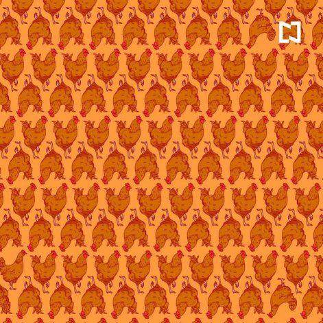 Reto viral en Facebook: ¿sabés diferenciar entre gallinas y gallos?