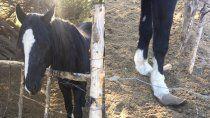 rescatan a caballo que necesitaba tratamiento veterinario urgente