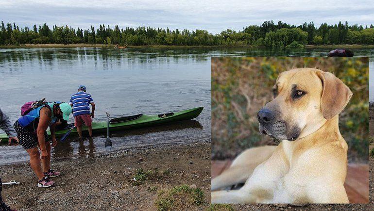 Tras ocho meses de búsqueda, Milo regresó con su familia a Cipolletti