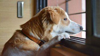 los perros tienen una crisis al llegar a la mediana edad
