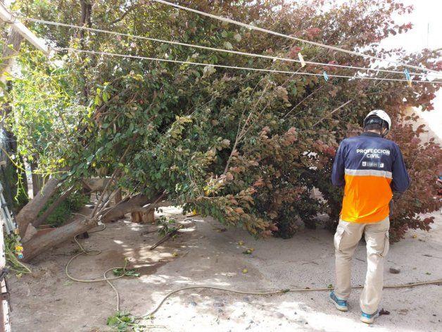 El viento tiró árboles y voló chapas en Cipolletti