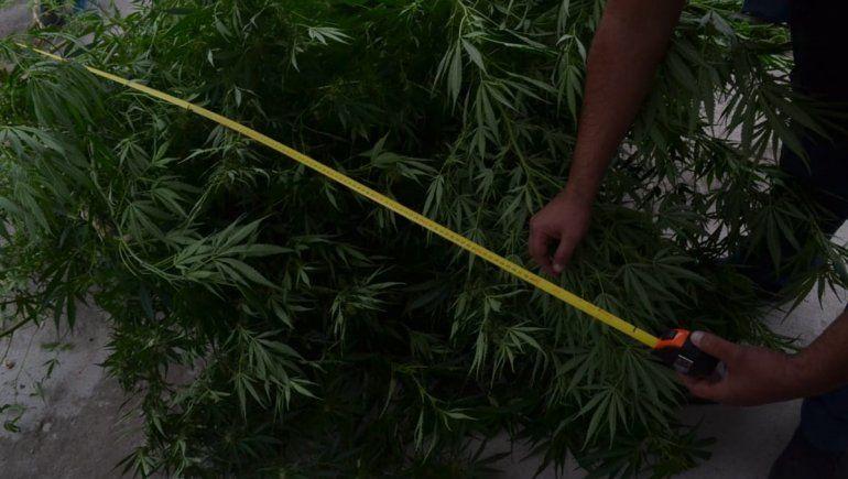 Una presunta narco hará una probation para evitar el juicio