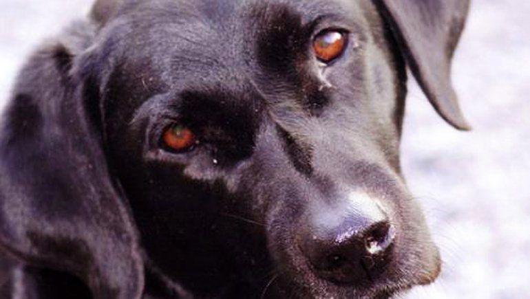 Acusan a un hombre por tirar salchichas con veneno a un patio y matar a dos perros