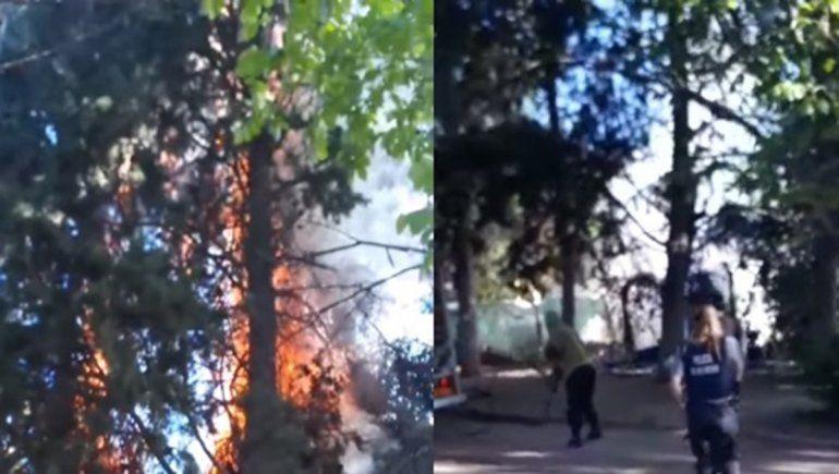 Prendieron fuego los pinos del Parque Rosauer