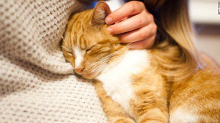 Incorporaron nuevos profesionales veterinarios a la Dirección de Zoonosis