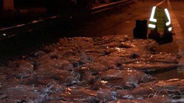 La atraparon transportando 600 kilos de carne ilegal