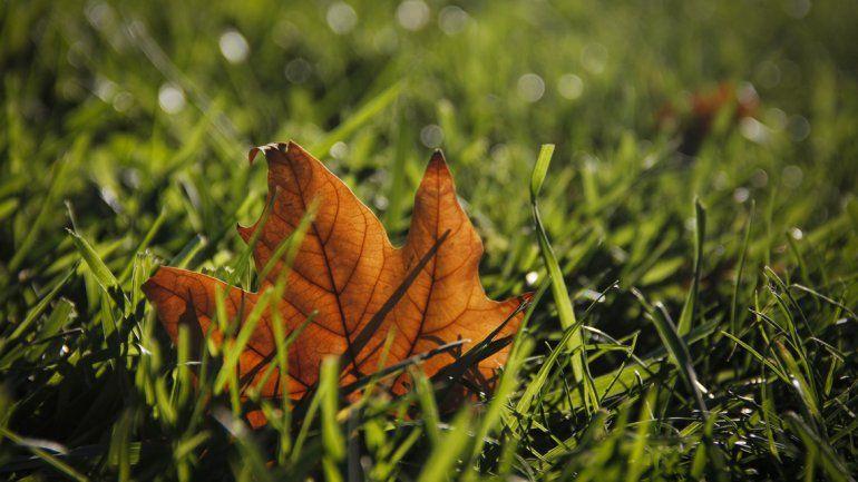 Intensificarán las tareas de recolección de las hojas caídas