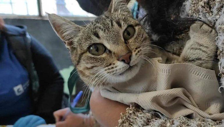 Más de 100 mascotas fueron desparasitadas y vacunadas en Parque Norte
