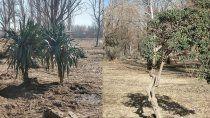 aseguran que los arbustos de la alem estan plantados en el vivero municipal