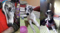 el acusado de torturar y matar a la perra estelita ira a juicio