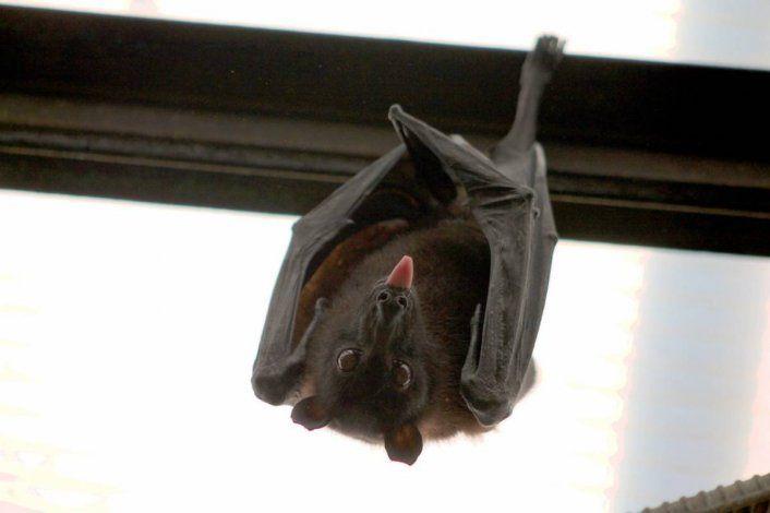 Los murciélagos se adueñaron de dos barrios cipoleños