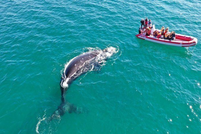 Con una App podés saber dónde avistar ballenas y delfines en Río Negro