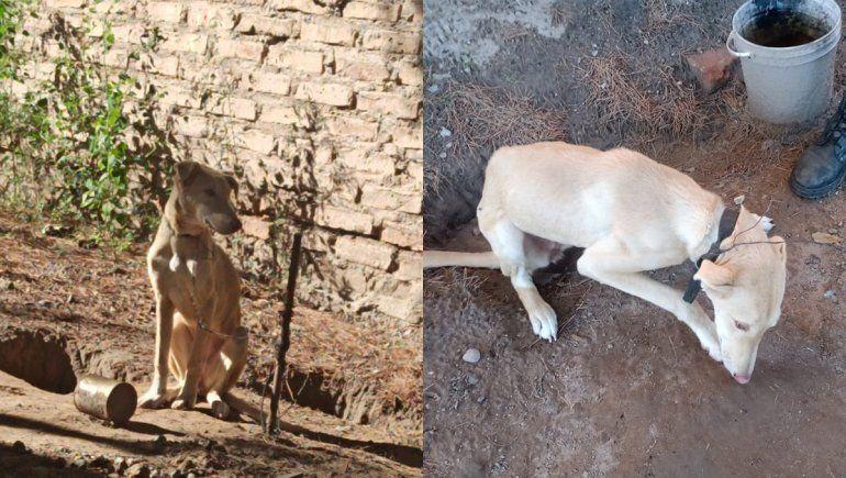 Catriel: rescataron a un perro que era maltratado por sus dueños
