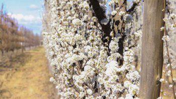 que dice el pronostico para hoy: ¿vuelven los dias primaverales?