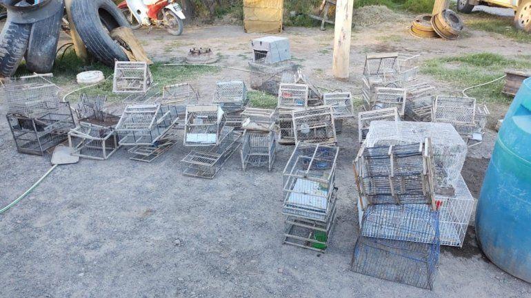 Las jaulas secuestradas en la casa del infractor.