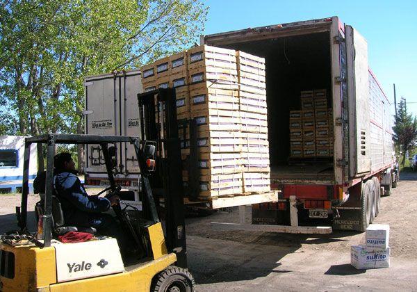 Baja sensible en la exportación de manzanas a Brasil