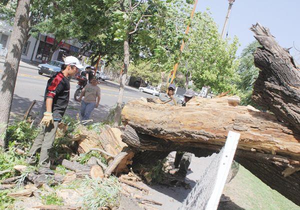 Pudo ser una tragedia: el intenso viento tiró un árbol sobre la vereda