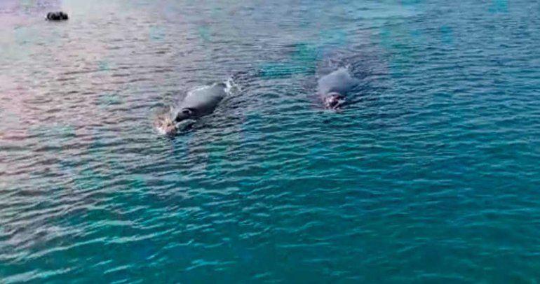Mirá las ballenas cerca de la costa y de los barcos en el puerto del Este