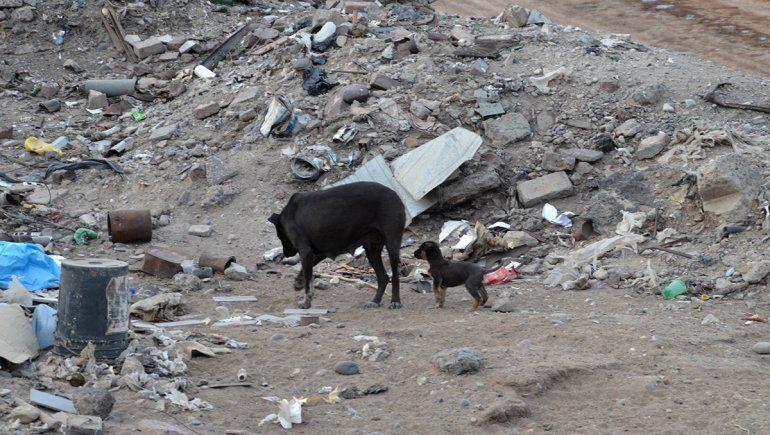 Basural: acuchillan a perros grandes y se comen a cachorros