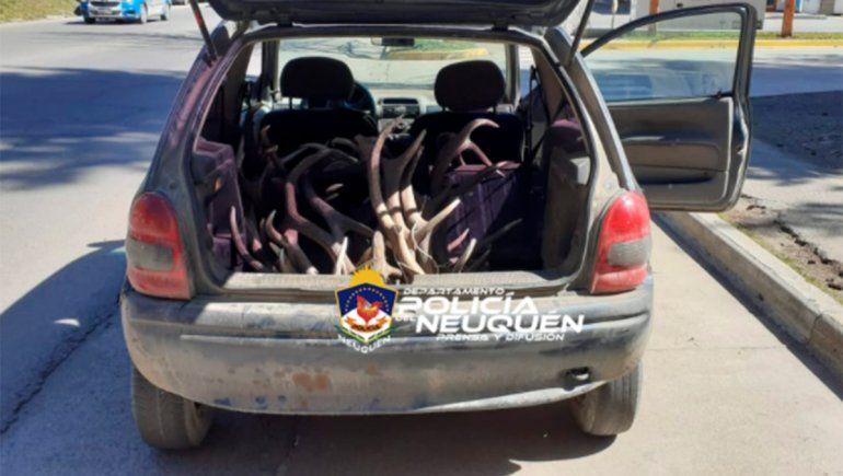 Transportaban astas de ciervo, los descubrieron y amenazaron con prender fuego a la policía