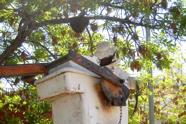 Sorprendidos por un panal de abejas