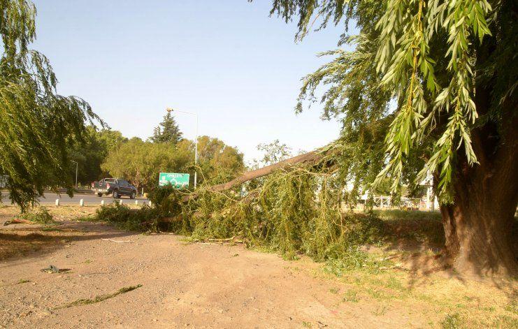 Una pesada rama aplastó a un hombre en la rotonda