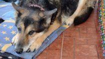 isla jordan: la emotiva carta que devela la cruel realidad de la perrera