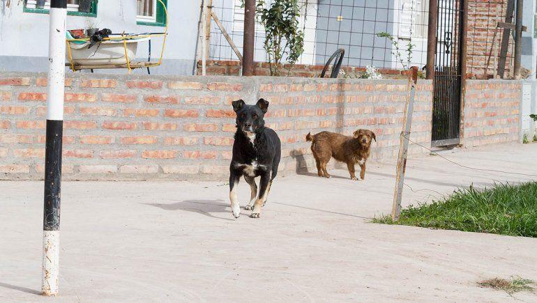 Dueños de perros bajo la lupa tras otro brutal ataque