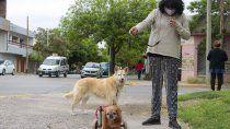 toto, el perro que salvo la vida de isabel