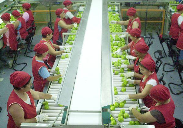 Brasil traba la importación de manzanas del Alto Valle