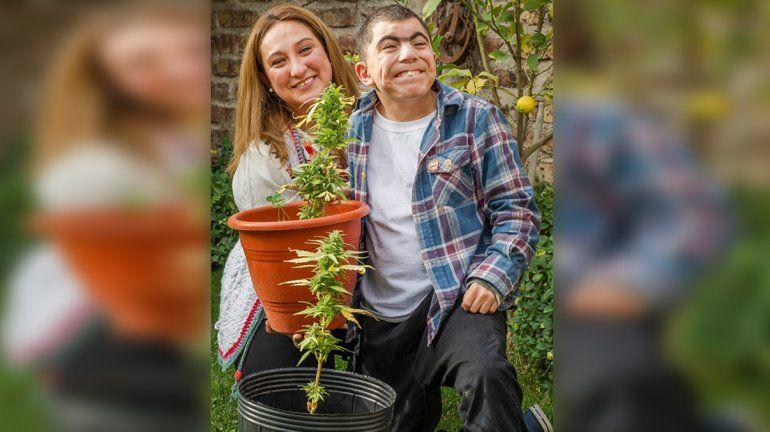 Robaron plantas de cannabis medicinal que ayudan a la salud de Giuliano