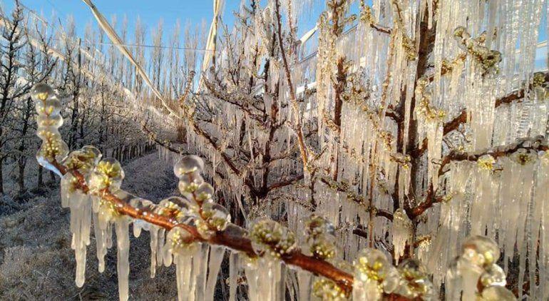 Otra mañana helada en el Alto Valle: mirá cómo seguirá el clima