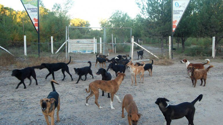 Perros del refugio canino atacan a la gente de una toma