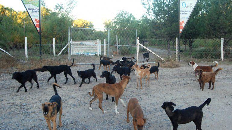 El Municipio cipoleño firmó histórico convenio con proteccionistas por la guardería canina