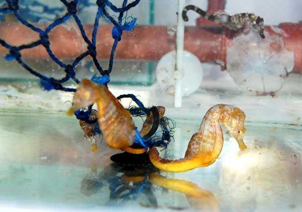 Un paseo a través de la ciencia marina de Las Grutas