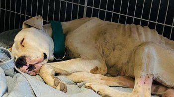 rescataron a un perro que estaba a punto de morir de hambre