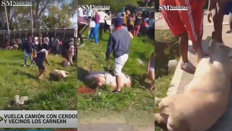 Volcó un camión con cerdos y la ruta se convirtió en un matadero