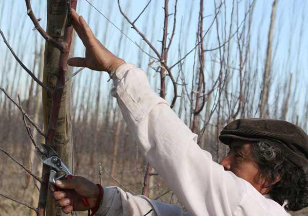 Productores niegan aumento a trabajadores rurales