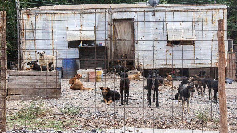 Quieren desocupar el refugio canino en no mas de tres años