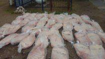 decomisaron alrededor de 500 kilos de carne sobre la ruta 22
