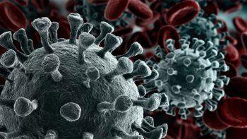 detectan en belo horizonte variante mas infecciosa y agresiva