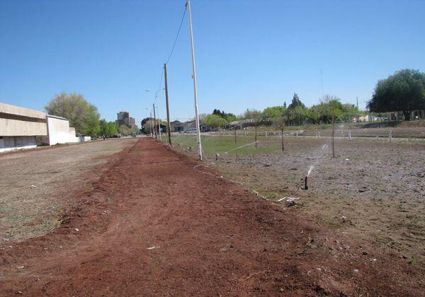 Cinco Saltos hacia el verde: Inauguran obras de riego por goteo