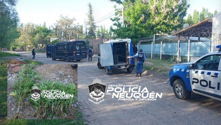 Centenario: secuestraron armas y 240 plantas de marihuana