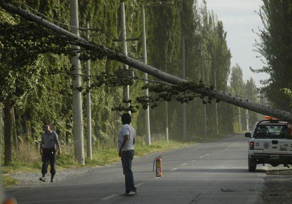 Temor por caída de árbol sobre cableado