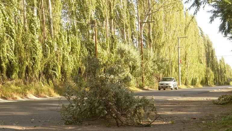 Emiten alerta por fuertes ráfagas de viento para todo el Alto Valle