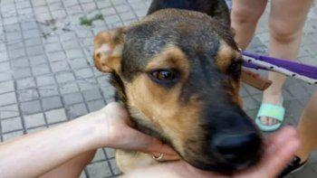 De terror: se mudaron y abandonaron a su perro sin agua ni comida cinco días