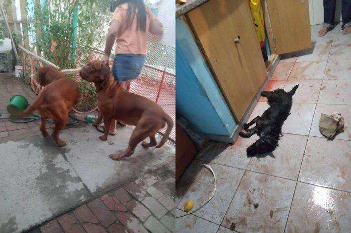 Un horror: le mataron a su perra en la cocina