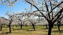 sigue el clima de primavera en el alto valle